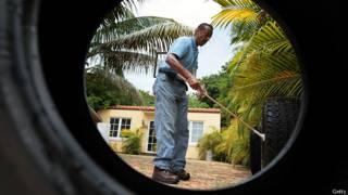 Hombre en Florida recoge datos de la larva del mosquito Aedes aegypti