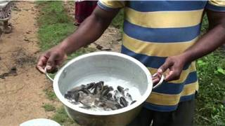 Pobladores en Sri Lanka