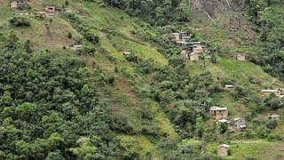 Plantación de coca en Bolivia