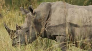 Rinoceronte en el Parque Nacional Kruger