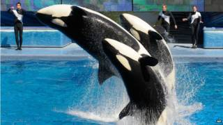 140816130754_seaworld_624x351_ap_nocredi