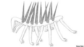 Dibujo de Hallucigenia sparsa