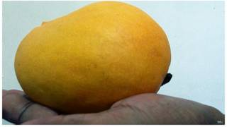 Mango Coupon Code Uk Grow Tent Package Deals