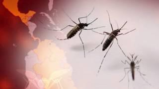 El mosquito, además del Zika, puede transmitir dengue, chikungunya o fiebre amarilla.