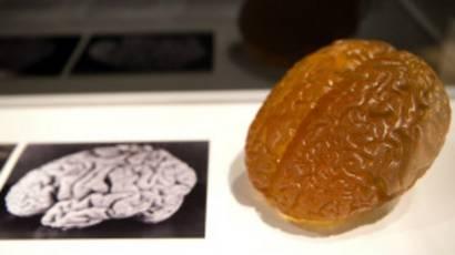 Réplica del cerebro de Einstein.