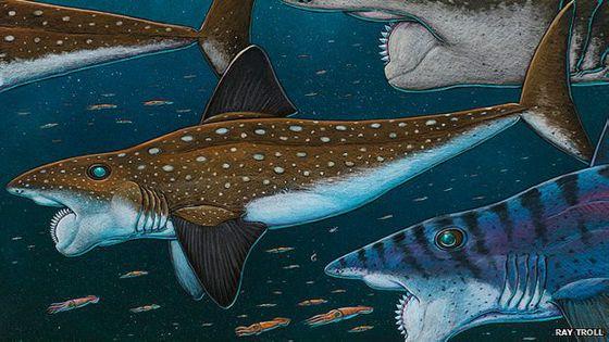 Resultado de imagen de helicoprion fosil