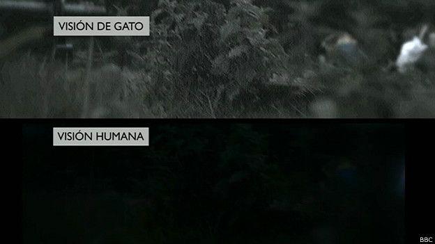 Vision comparada de gatos y seres humanos