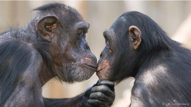 ¿Por qué se besan los humanos?