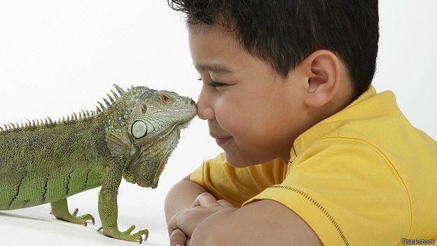 Мальчик и ящерица