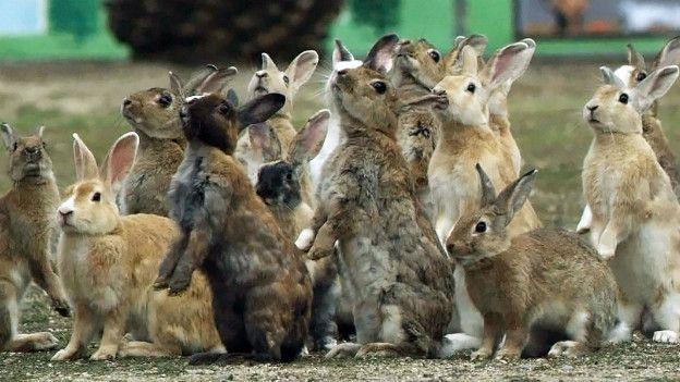 Por qu en realidad los conejos no se reproducen como conejos bbc mundo - Como se aparean los elefantes ...