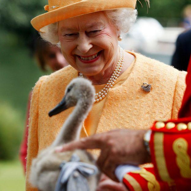 Елизавета и лебедь