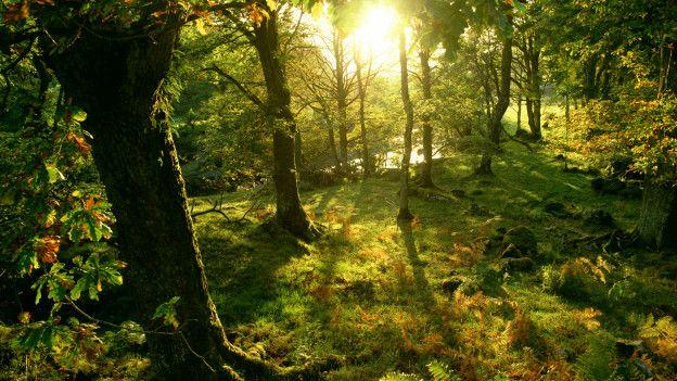 Un bosque