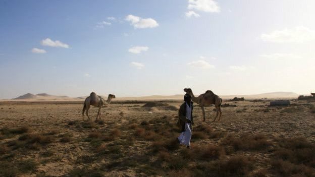 Un hombre junto a dos camellos en el desierto
