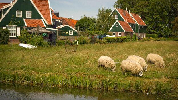 Деревня в Голландии