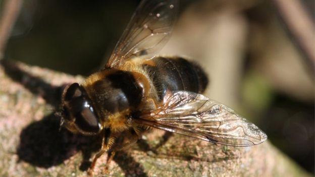 Некоторые талибы получают прибыль, продавая мед