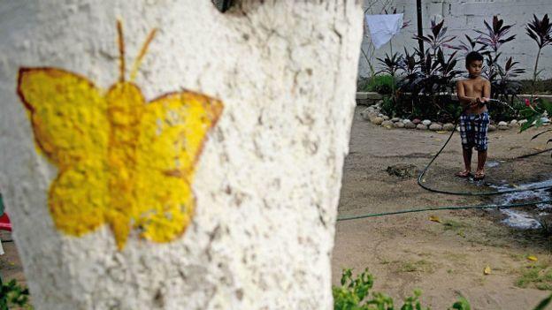 Un niño riega un patio, una dibujo de una mariposa amarilla en un árbol