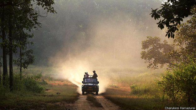 Сафари на внедорожнике в заповеднике Канха в Индии