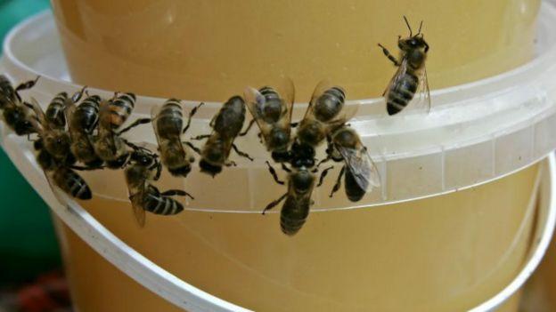 Бджоли