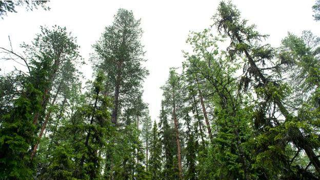 Bosque de Noruega