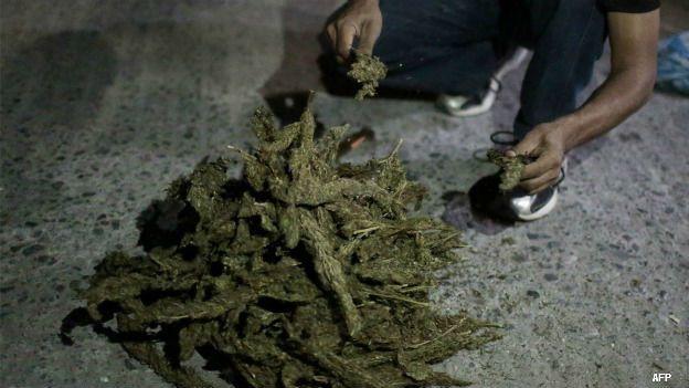 Quema de marihuana confiscada en Michoacán