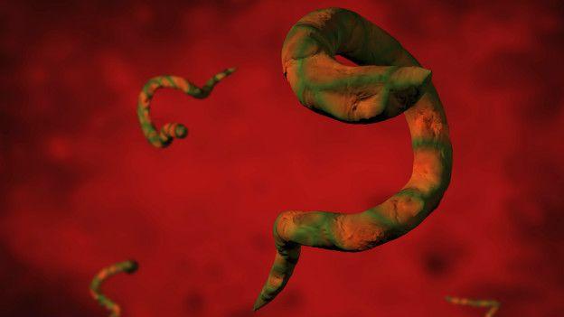 Parásito intestinal