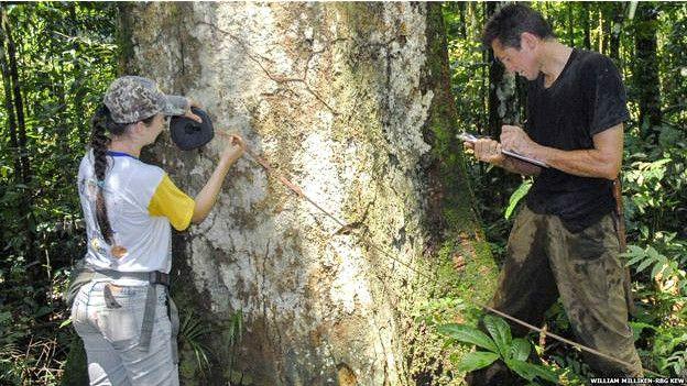 Estudio de árboles en la Amazonía brasileña