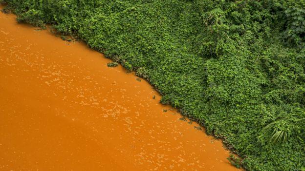Contraste de colores entre la vegetación y el agua contaminada