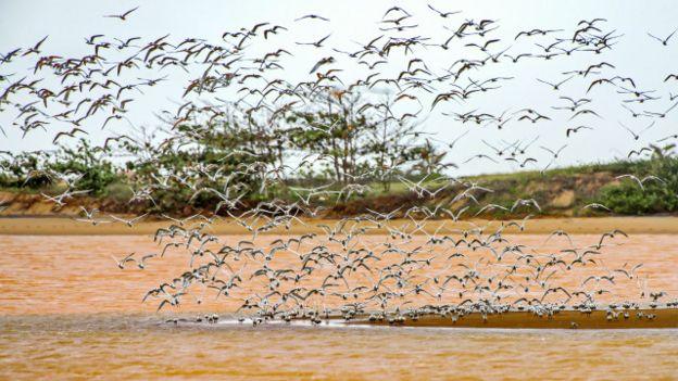 Algunas de estas aves ya han sido encontradas muertas