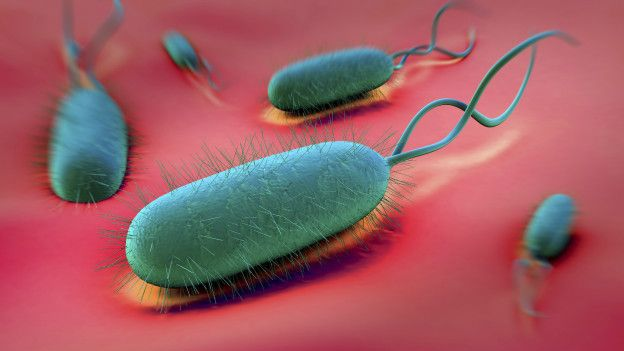 http://ichef-1.bbci.co.uk/news/ws/624/amz/worldservice/live/assets/images/2015/12/04/151204153701_helicobacter_pylori_624x351_thinkstock_nocredit.jpg