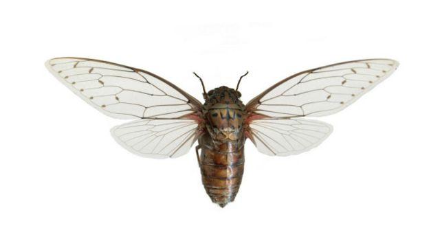 151218165637_vert_insetos3_640x360_alamy_nocredit Qual inseto emite o som mais alto? Curiosidades