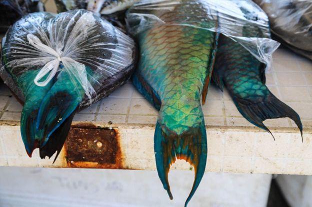 El pescado es el alimento tradicional del Tonga.