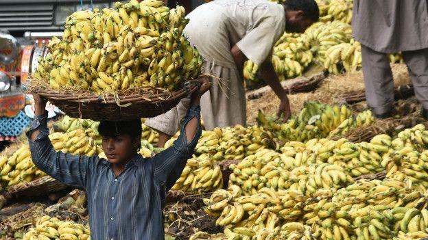 Un productor paquistaní de bananas transporta la fruta en octubre de 2015.