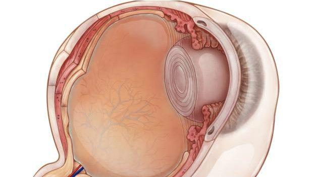 Un dibujo del ojo por dentro