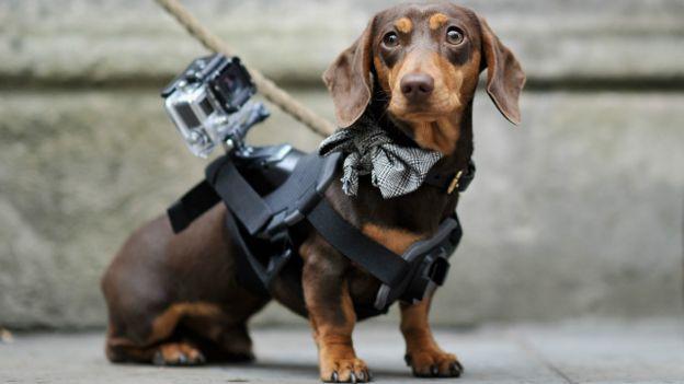 GoPro y el perro.