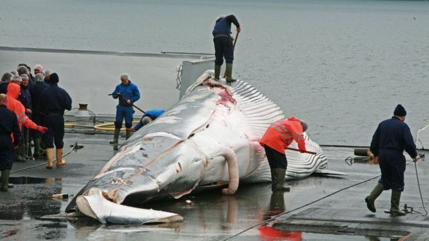 La Haya ordenó a Japón que suspenda la caza de ballenas 160209164237__87988160_bbc70378-22e5-49df-ab67-48cd77264b7c