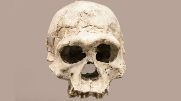 Cráneo de Homo erectus