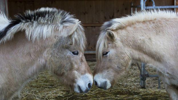 Dos animales con las cabezas juntas