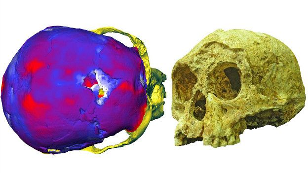 http://ichef-1.bbci.co.uk/news/ws/624/amz/worldservice/live/assets/images/2016/03/01/160301093510_hobbit__layers_bone_skull_624x351_antoinebalzeau_nocredit.jpg