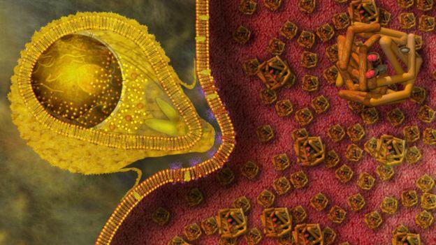 Parásito de la malaria
