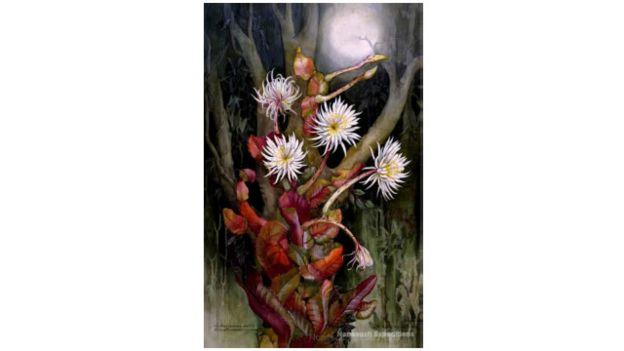 Mítica flor de la luna