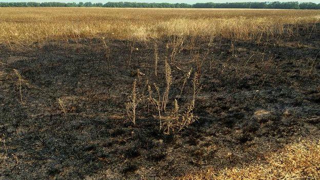 Выгоревшая трава в поле у Красного Октября