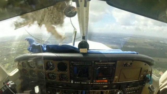 Avião bate em pássaro. Foto: EVN/Reprodução de vídeo