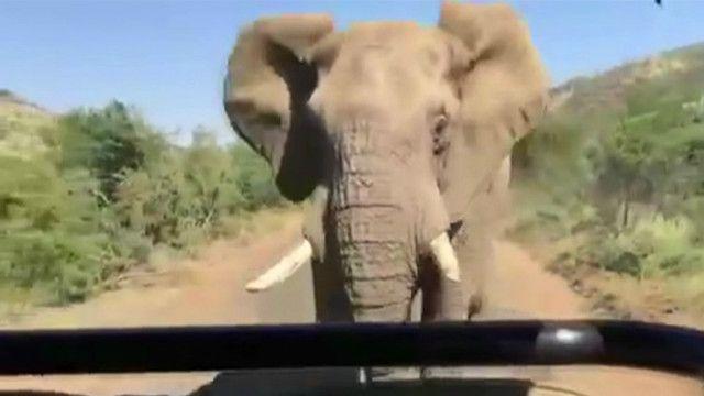 Arnold Schwarzenegger'i fil kovaladı