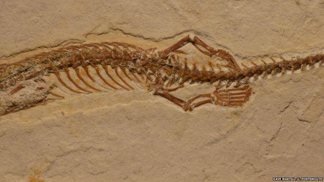 بالصور: اكتشاف حفرية لثعبان بأربعة أرجل
