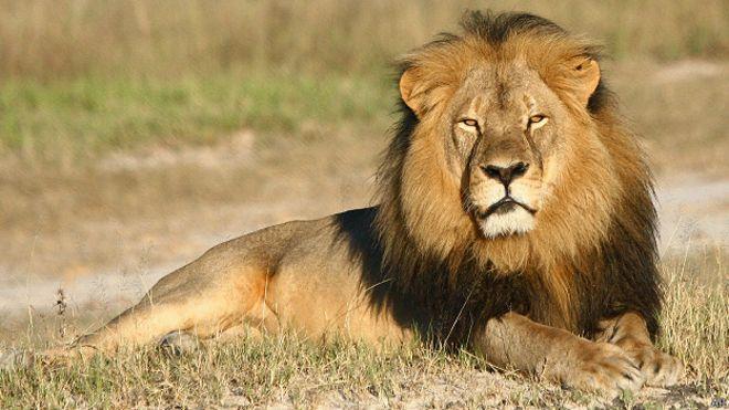 Cecil, el león