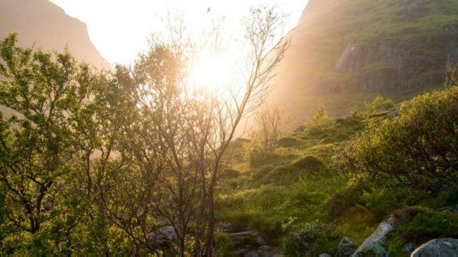 Bosque noruego