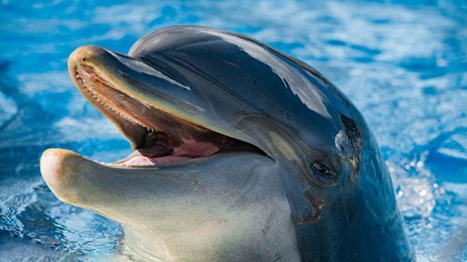 Дельфины приносят одно удовольствие thumbnail