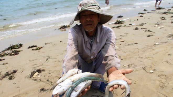 Вьетнамцы требуют отчета о массовой гибели рыбы