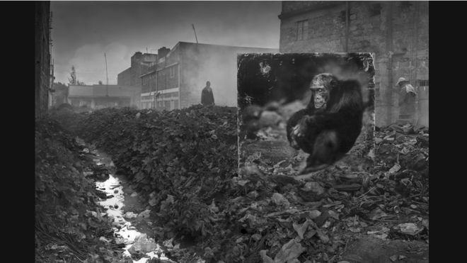 © Nick Brandt. Cortesía de Atlas Gallery