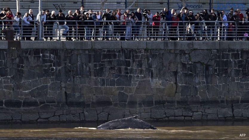 ballena en puerto madero, argentina